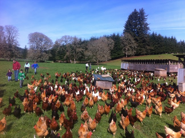 Laying Hens – Deck Family Farm